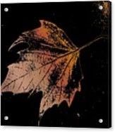 Leaf On Bricks Acrylic Print