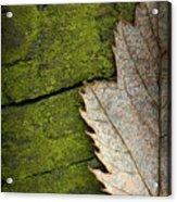 Leaf On Green Wood Acrylic Print