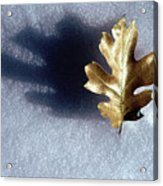 Leaf On Snow Acrylic Print