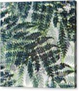 Leaf Patterns Acrylic Print