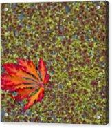 Leaf Pond Acrylic Print