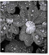 Leaf Pools Acrylic Print