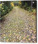 Leaf-strewn Trail Acrylic Print