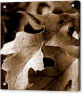 Leaf Study In Sepia IIi Acrylic Print
