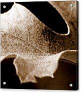 Leaf Study In Sepia Acrylic Print