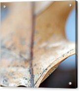 Leaf Study Vii Acrylic Print
