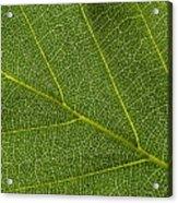 Leaf Textures Acrylic Print