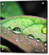 Leaf Veins And Raindrops Acrylic Print