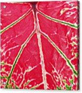 Leaf Veins Acrylic Print