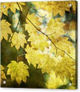 Leaf Zen T Acrylic Print