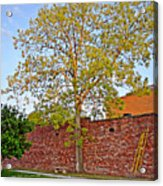 Leafing Out Acrylic Print