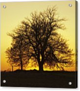 Leafless Tree Against Sunset Sky Acrylic Print