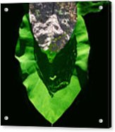 Leaf.three Layers Acrylic Print