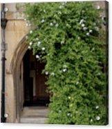 Leafy Archway  Acrylic Print