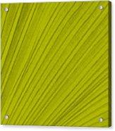 Leafy Leaf Acrylic Print