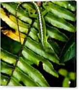 Leafy Lizard Acrylic Print