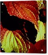 Leafy Melange Acrylic Print