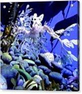 Leafy Sea Dragon Acrylic Print by Kelly Mills