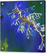 Leafy Sea Dragon Acrylic Print by Thanh Thuy Nguyen