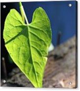 Leafy Veins Acrylic Print