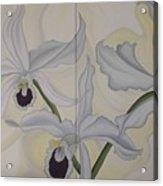 Lealia Purpurata   Orchide Acrylic Print