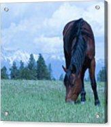 Leaning Horse Acrylic Print
