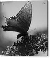 Learn To Fly 001 Acrylic Print