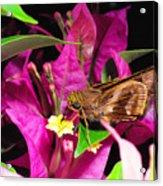Least Skipper Butterfly Acrylic Print