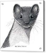 Least Weasel Acrylic Print