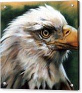 Leather Eagle Acrylic Print by J W Baker