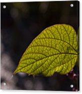 Leav Venation Acrylic Print