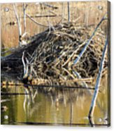 Leave It To Beaver Acrylic Print