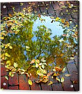 Leaves And A Puddle Acrylic Print