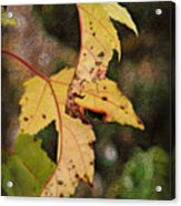 Leaves And Autumn Acrylic Print