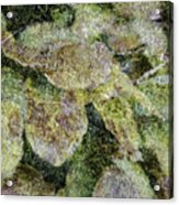 Leaves And Moss Acrylic Print