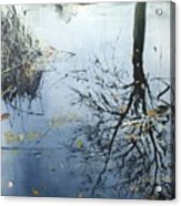 Leaves And Reeds On Tree Reflection Acrylic Print