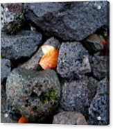 Leaves And Stones Acrylic Print