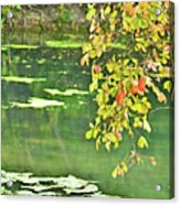 Leaves And Water Acrylic Print