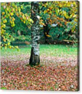Leaves Blowing Off The Autumn Tree Acrylic Print
