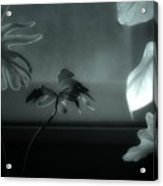 Leaves By Moonlight Acrylic Print