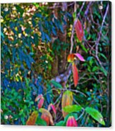 Leaves Changing Color As Autumn Approaches In Iguazu Falls National Park-argentina   Acrylic Print