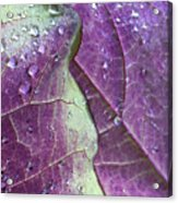 Leaves, Color,  And Dew Acrylic Print