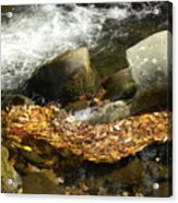 Leaves Flowing-2 Acrylic Print
