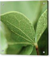 Leaves, Fresh Acrylic Print