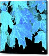 Leaves In Blue Acrylic Print