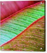 Leaves In Color  Acrylic Print