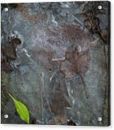 Leaves In Ice At Upper Creek Falls Acrylic Print