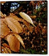Leaves In Late Autumn Acrylic Print
