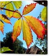 Leaves In Sunlight 4 Acrylic Print
