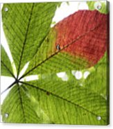 Leaves. Acrylic Print by Itai Minovitz